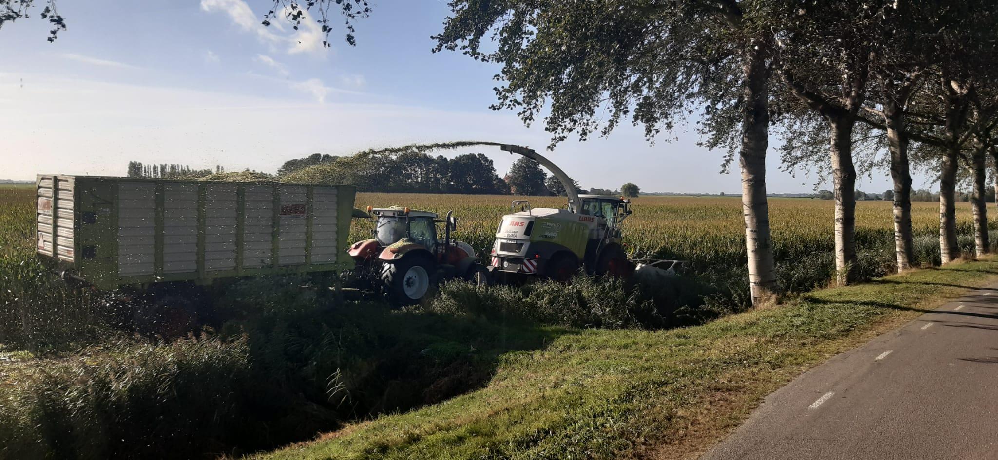 Eerste-maïs-2021